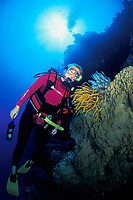 diver and crinoids or feather stars, Vava'u, Tonga, South Pacific Ocean