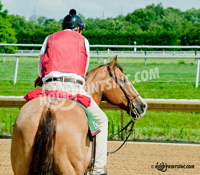 Lance before The Oh Say Stakes at Delaware Park on 6/29/13
