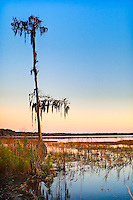 Ocean Pond at sunset - it was a beautiful evening for camping in the North Florida wilderness!