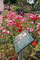 Prisoner Garded sign in Gardens of Alcatraz, Garden Conservancy Tour
