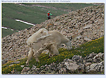 Late afternoon, after the last hikers descend, is the most common time to view wildlife.<br />
