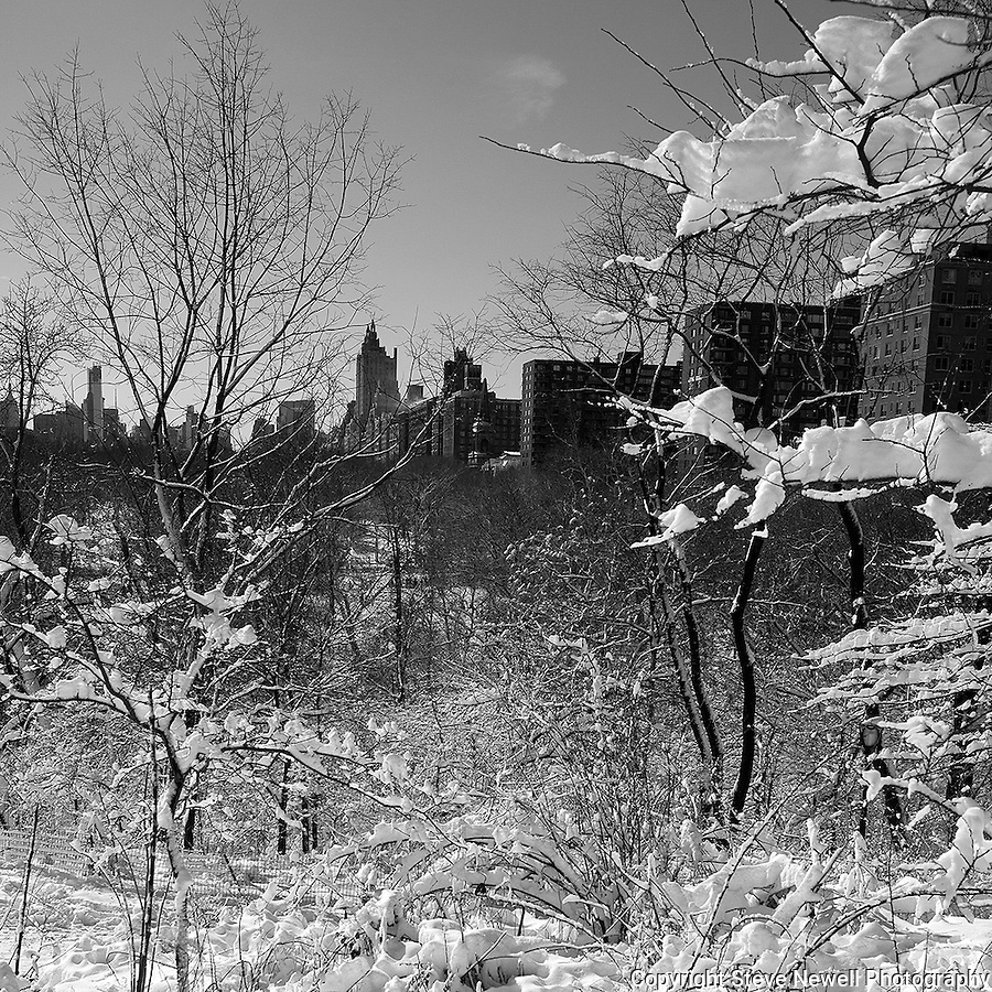 """""""Solitude in the City"""" Central Park New York. I had been shooting for several days in and around Manhattan when the worst storm in 20 years blew in on a Friday and lasted through Sunday.  The Governors in several states banned driving personal vehicles on the public highways for a couple days.  Being from Lake Tahoe I came prepared for the storm and was excited to capture New York City and Central Park with fresh snow.  The contrast of the abundant tall buildings surrounding Central Park was surreal. The loud noise of the city's activity was replaced with the solitude of nature inside the parks boundaries. The birds enjoyed the exposed water in the ice ponds and weren't bothered in sharing the experience with their human companions visiting the park for the day. Many families took to the park to play in the fluffy deep fresh snow with sleds for the hills and entertaining snow ball battles. I still found myself at times insulated from the park visitors and the bustling city by the absolute quietness nature offers in the isolated mountains of  my home town. Black and white photography is still my favorite so you will see many images offered in Color and BW."""