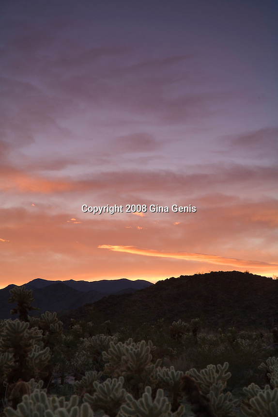 A winter sunset over the Cholla Garden in Joshua Tree National Park.