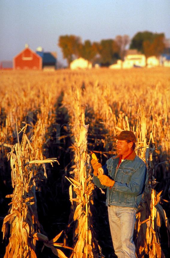 Midwest farmer in corn field during harvest season.