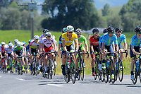Aaron Gate (EvoPro) in the yellow jersey. Stage Two - Hydro Heat (Cambridge -Roto o rangi - Pukeatea). 2019 Grassroots Trust NZ Cycle Classic UCI 2.2 Tour from St Peter's School in Cambridge, New Zealand on Thursday, 24 January 2019. Photo: Dave Lintott / lintottphoto.co.nz
