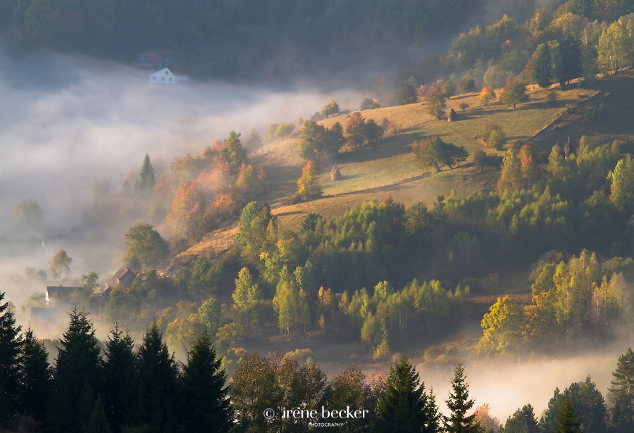 Foggy morning at Zaovine,Tara National Park, Serbia.