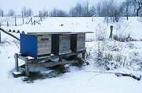 Imkerei im Winter bei Schnee, Überwinterung, Bienen, Bienenvolk, Bienenstock, Bienenstöcke, Honigbiene, Honig-Biene, Honigbienen, Biene, Bienen, Imkerei, Apis mellifera, honey bee, hive bee
