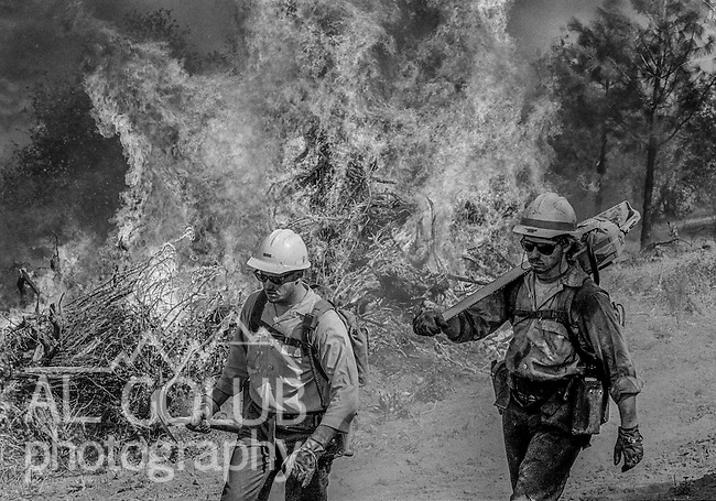 September 3, 1987 Pine Mountain Lake, California --Stanislaus Complex Fire -- Stanislaus National Forest sawyer Mark Carter moves down fire line while backfire is in progress. The Stanislaus Complex Fire consumed 28 structures and 145,980 acres.  One US Forest Service firefighter, David Ross Erickson, died from a tree-felling accident.