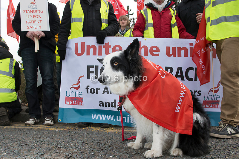 Pickets at Wakefield HQ Ambulance station with dog Milo