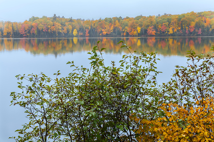 Morning light on Fall color on Sweeny Lake; Vilas County. WI
