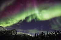 Violet and green aurora borealis curtains lights the nights sky in Alaska's Brooks range, arctic, Alaska