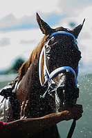Spring Venture, is washed down after a winning finish at Woodbine Race Course in Ontario, Canada on September 15, 2012.