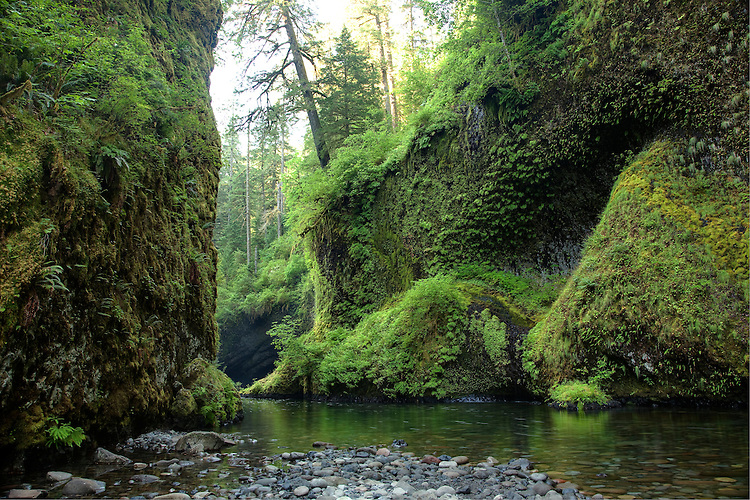 The rainforest and lush green gorge of Eagle Creek is located near the Columbia River in Oregon