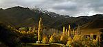Autumn colour at Macetown. Otago Region. New Zealand.