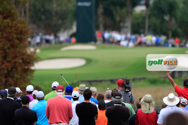 Rickie Fowler (USA) during round 4 of the Hero World Challenge, Isleworth Golf &amp; Country Club, Windermere, Orlando Florida, USA. 07/12/2014<br /> Picture Fran Caffrey, www.golffile.ie
