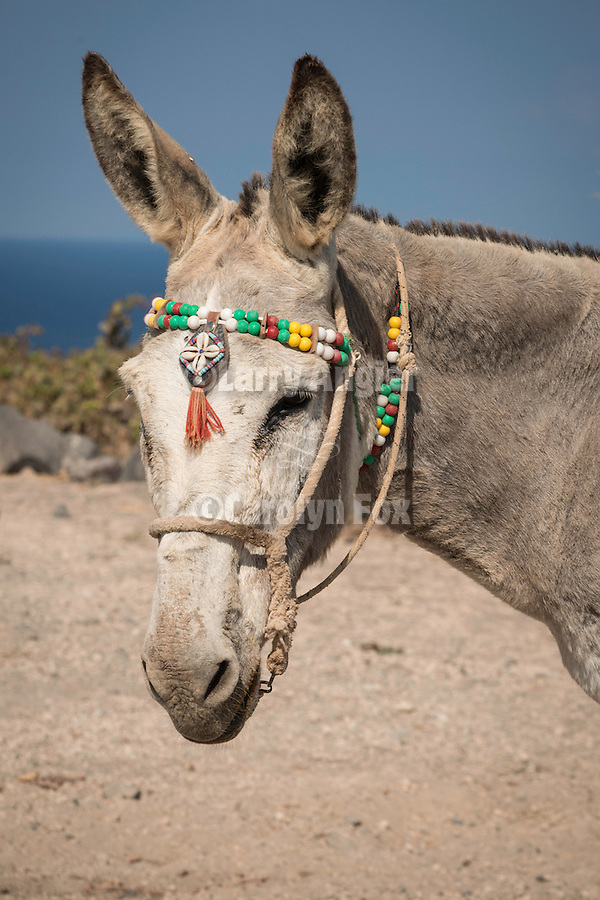 Donkey with beads, Akrotiri, Thira, Santorini