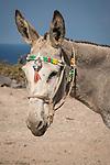 Donkey with beads, Akrotiri, Thira, Santorini