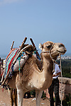 Camels are still an important part of the transportation in this part of North Africa.