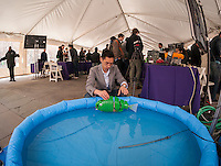 "Ph.D candidate Paul Phamduy's adjusts his robotic fish, built in collaboration with other students, in a pool of water at NYU-Polytechnic School of Engineering's Research Expo in Brooklyn's ""Tech Triangle"" in New York on Friday, April 24, 2015. Over forty research projects and their creators will exhibit and explain their research including cutting-edge robotics, engineering and biotechnology.  (© Richard B. Levine)"