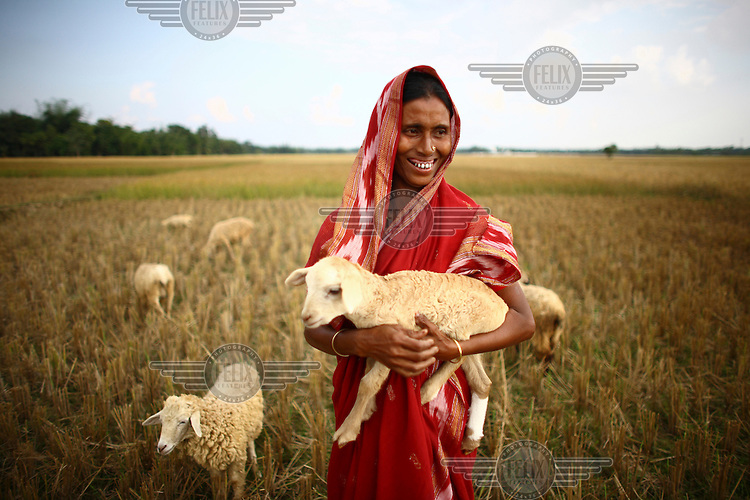 38 year old Airun Nesa with her sheep purchased with microfinance credit from the IFAD (International Fund for Agricultural Development) project in Jalsora, Srimangal.
