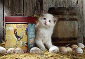 Xavier, ANIMALS, cats, photos, SPCHCATS715B,#A# Katzen, gatos