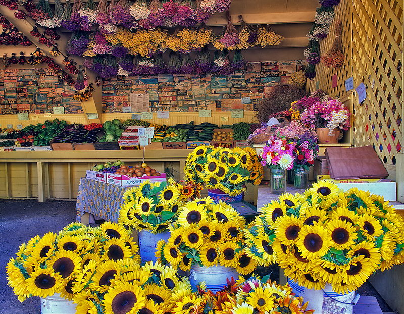 Ornamental sunflowers, fruit and vegetables at Wake Robin Farm, Oregon.