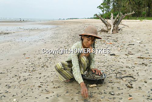 Just north of Ngwe Saung beach, in the next but one bay a local village woman picks stones off the beach. This is an isolated fishing village, villagers, break stones or collect them from the neach or fish for a living.   Burma Myanmar 2011