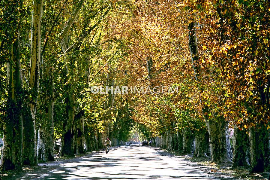 Árvores na estrada, Mendoza. Argentina. 1997. Foto de Ricardo Azoury.