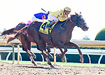 October 5, 2019: Sprawl, trained by Bill Mott, wins Race 4, maiden special weight, at Keeneland on October 5, 2019 in Lexington, KY. Jessica Morgan/ESW/CSM