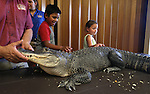 Gabe Kerschner introduces Izod, a North American alligator, to the kids at a Wild Things program at the Carson City Library, in Carson City, Nev., on Wednesday, July 30, 2014. <br /> Photo by Cathleen Allison