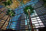 Palms in Schuster Center wintergarden, Dayton Ohio. View of buildings in Dayton framed by Schuster palms and window.