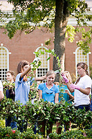 The making of the Meredith Class Day daisy chain 2009.