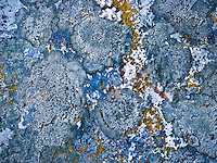 """GOLD VEIN""<br />