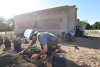 NWA Democrat-Gazette/FLIP PUTTHOFF <br />IN A ROUNDABOUT WAY<br />Anthony Rabago plant shrubs Tuesday June 5 2018 during a landscaping project near downtown Rogers. Workers planted shrubs at the new roundabout at Arkansas Street and Monte Ne Road.