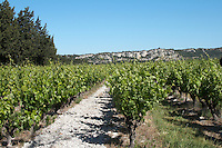vineyard cellier des chartreux rhone france