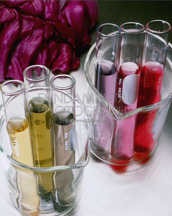 ANTHOCYANIN: RED CABBAGE pH INDICATOR<br /> Pigment Molecule Affected By pH.<br /> Like other indicator dyes, including phenolphthalein, the structure of the Anthocyanin molecule changes in its acid or base form, turning bright pink in acids, reddish-purple in neutral solutions and green in alkaline or basic solutions.