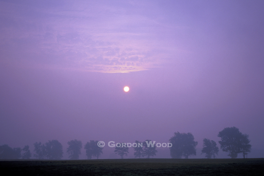 Sunrise over Misty Southern Ontario Field