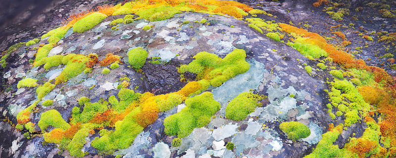 Green and orange moss on streamside rock. Major Creek. Columbia River Gorge National Scenic Area, Washington