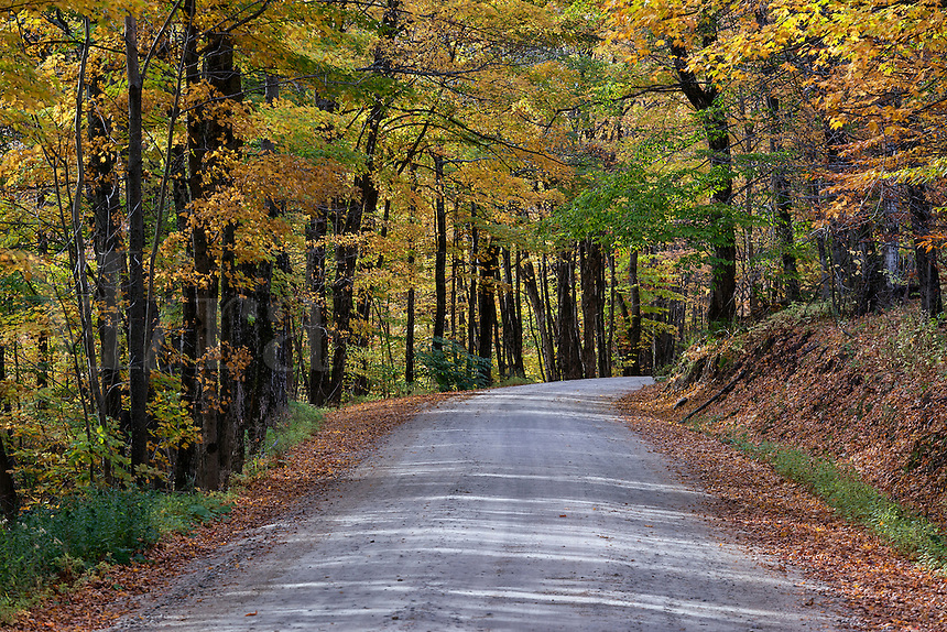Unpaved mountain road through colorful autumn trees, Vermont, USA