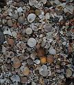 Shells on an arctic beach