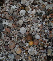 Shells on an arctic beach