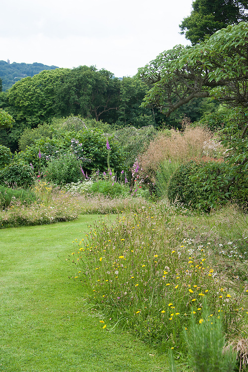 Informal, natural planting in the Cherry Tree Garden, Fairlight End, Pett, East Sussex, late June.