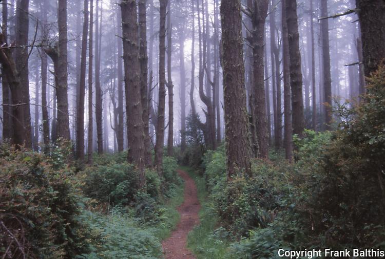 bishop pine forest, Old Pine Trail
