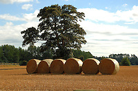 Bales of harvested corn. North Yorkshire,England, Sep 2007.