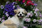Bob, ANIMALS, REALISTISCHE TIERE, ANIMALES REALISTICOS, dogs, photos+++++,GBLA4358,#a#, EVERYDAY