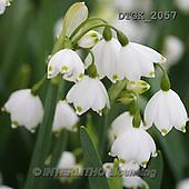 Gisela, FLOWERS, BLUMEN, FLORES, photos+++++,DTGK2057,#f#
