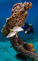 Scuba diver explores anchor at Calabas Reef, Bonaire, Netherland Antilles, Caribbean Sea, Atlantic Ocean, MR