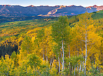 Gunnison National Forest, Colorado: Over view from Ohio Pass with aspen (Populus tremuloides) groves in fall color