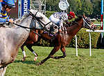 Master Plan (no. 10) wins Race 8, Aug. 5, 2018 at the Saratoga Race Course, Saratoga Springs, NY.  Ridden by  Javier Castellano, and trained by Todd Pletcher, Master Plan finished a nose in front of Mr Maybe (no. 4).  (Photo credit: Bruce Dudek/Eclipse Sportswire)