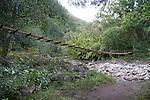 Swinging bridges near Wailuku town, Maui, Hawaii.